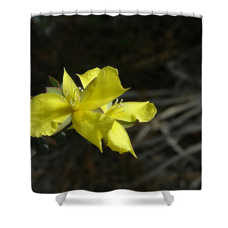 Flower Shower Curtain featuring the photograph St. John by Kimberly Mohlenhoff