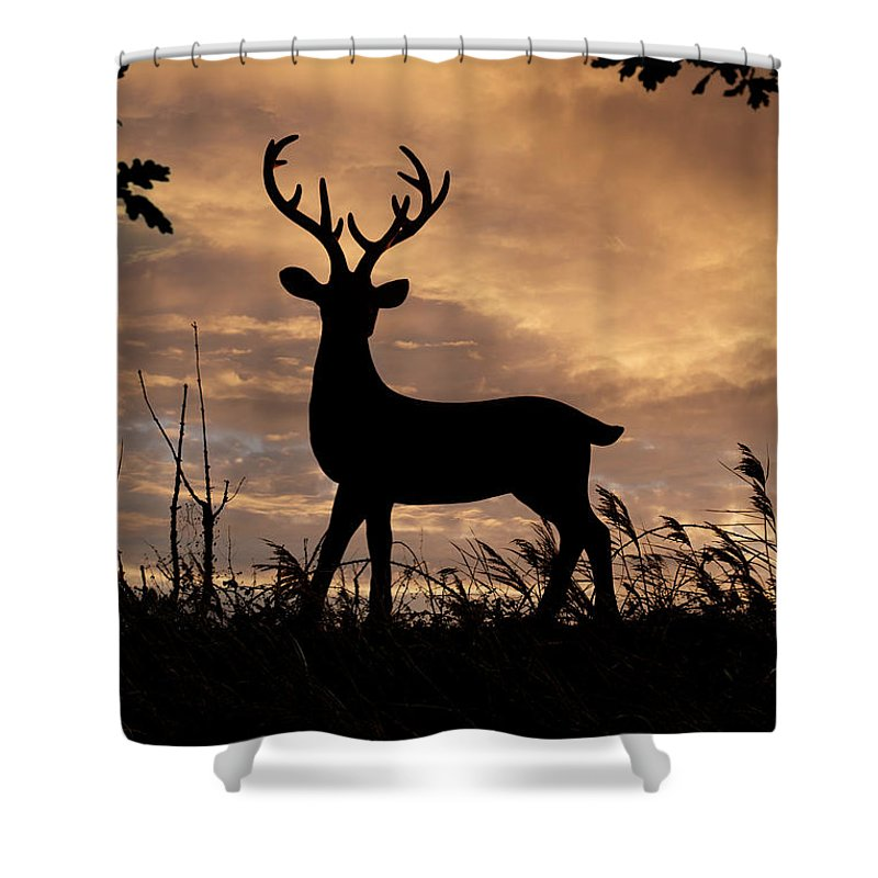 Deer Shower Curtain featuring the photograph Stag 002 by Clayton Bastiani