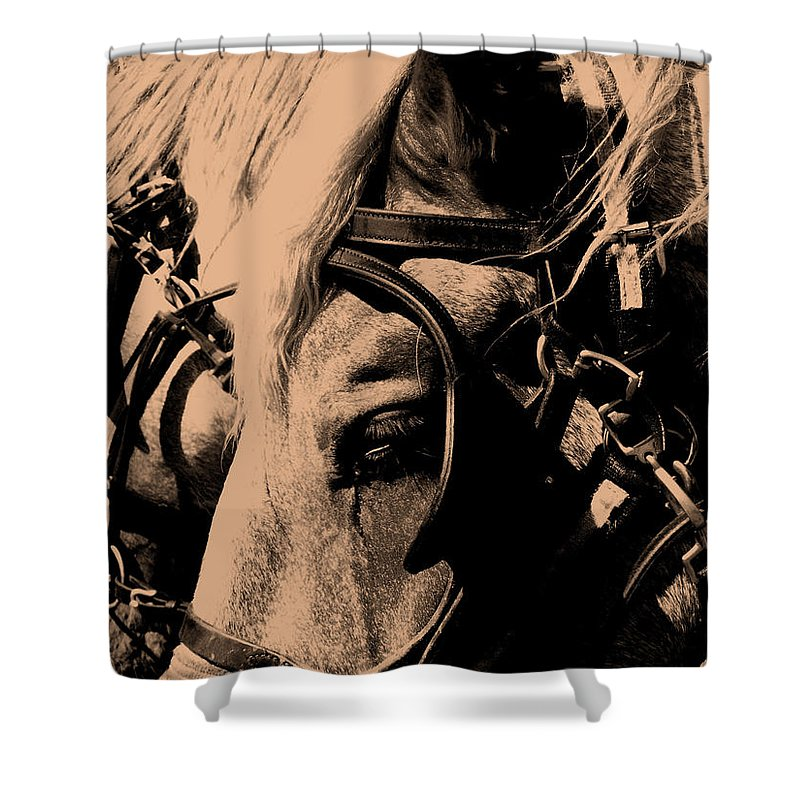Horse Shower Curtain featuring the photograph Stage Coach Horses by Wayne Potrafka