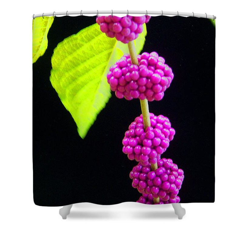 Flower Shower Curtain featuring the photograph Stalk Of Seeds by Laurie Paci