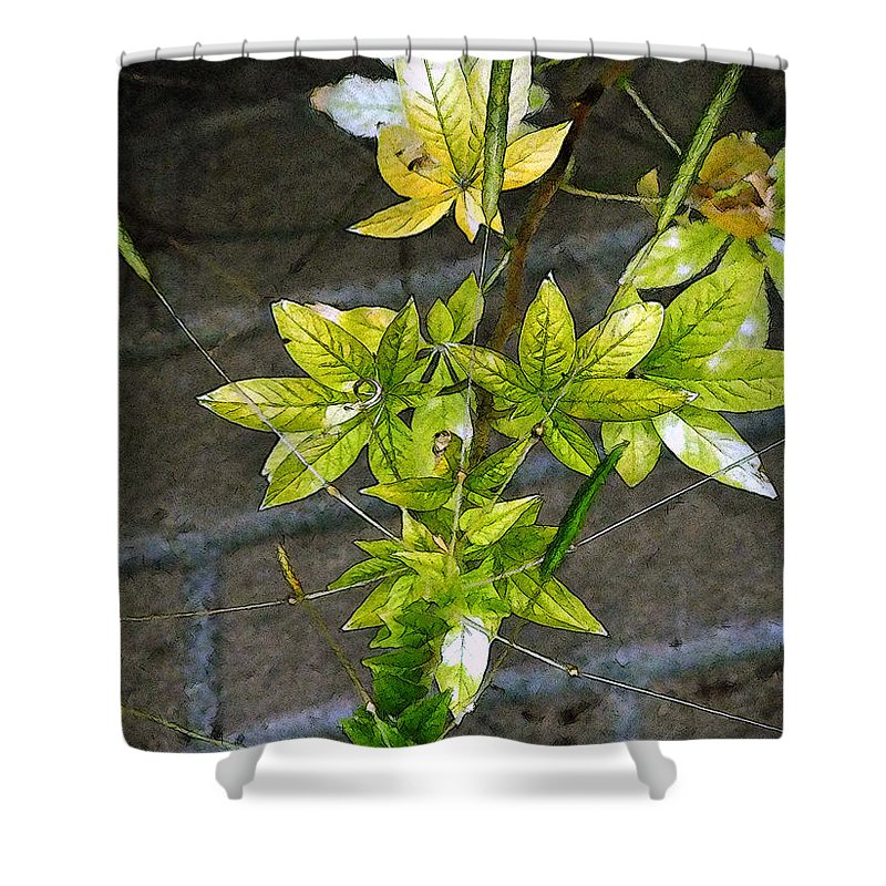 Autumn Shower Curtain featuring the painting Stalk With Seed Pods by RC DeWinter