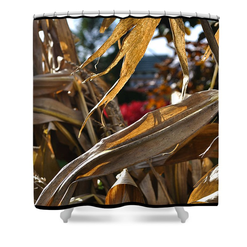 Corn Stalk Shower Curtain featuring the photograph Stalks by Tim Nyberg