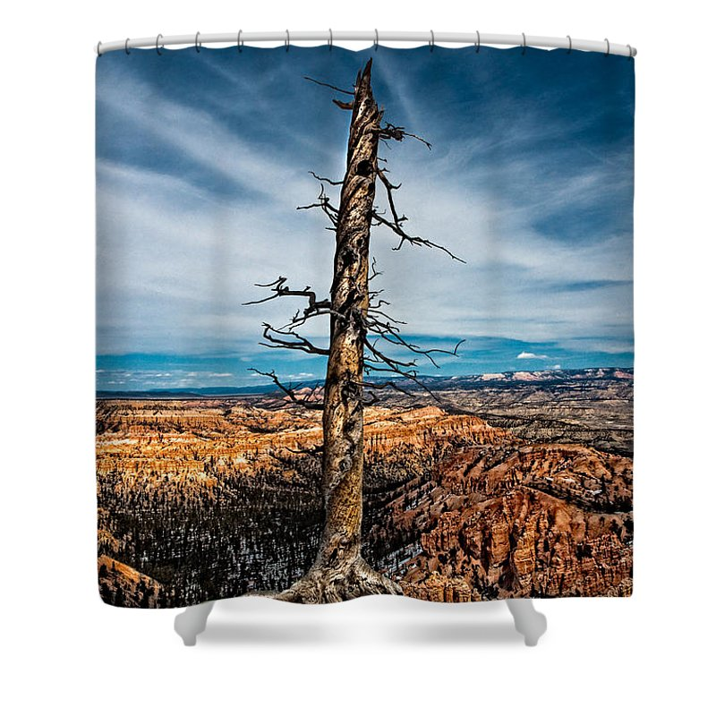 Art Shower Curtain featuring the photograph Standing Regardless by Christopher Holmes