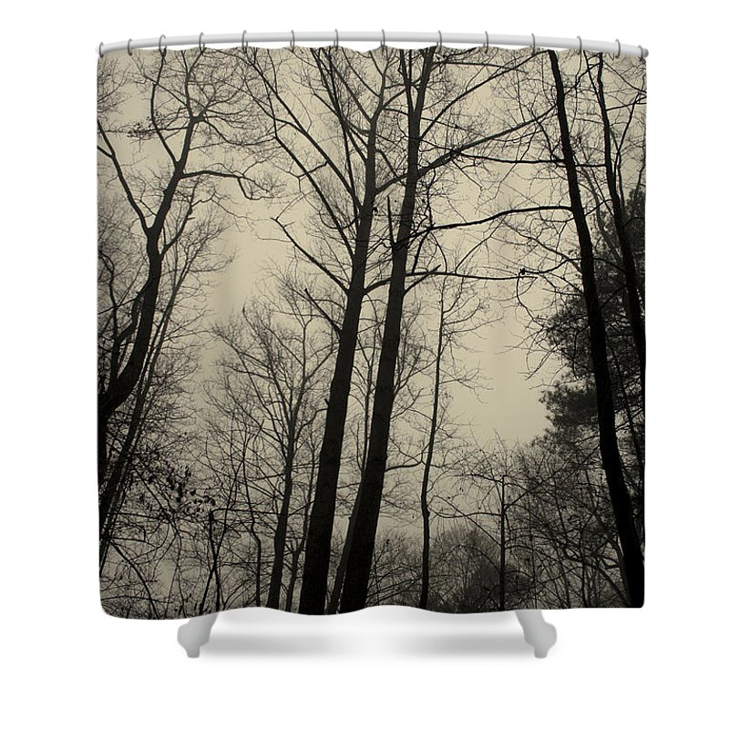 Trees Shower Curtain featuring the photograph Standing Tall by Ayesha Lakes