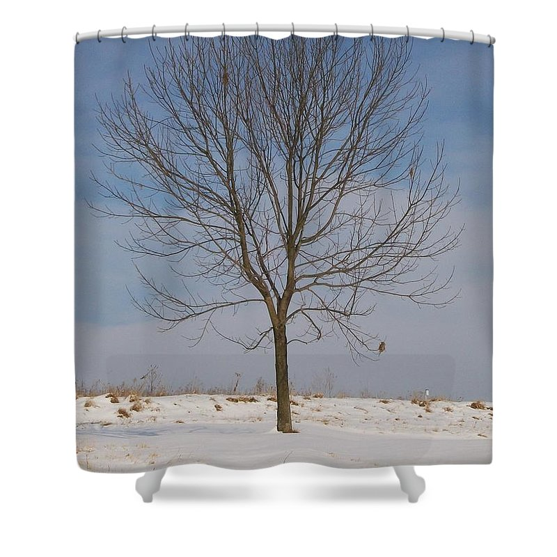 Tree Shower Curtain featuring the photograph Standing Tall by Sara Raber