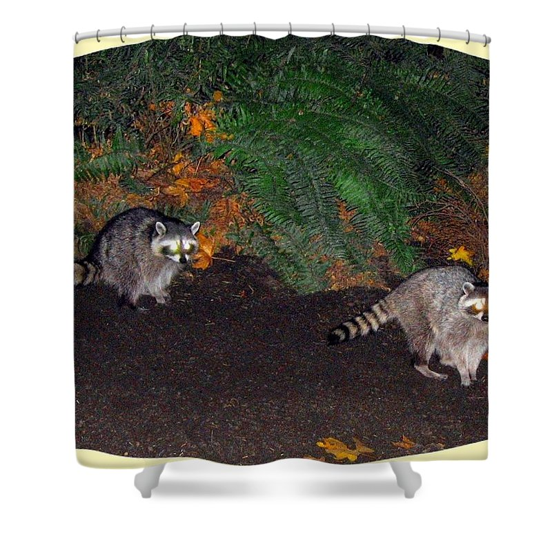 Raccoons Shower Curtain featuring the photograph Stanley Park Rascals by Will Borden