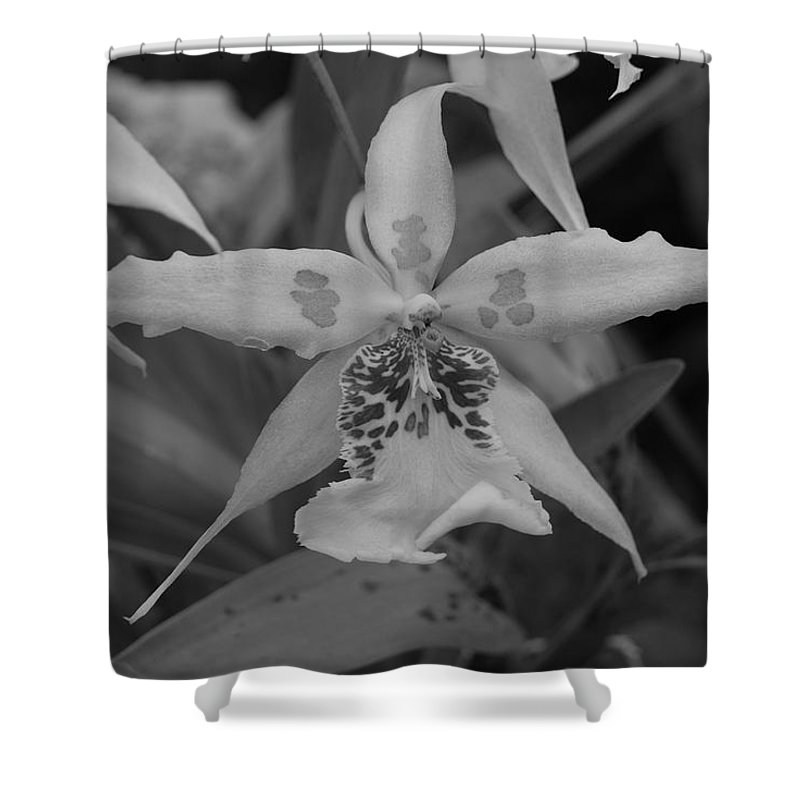 Macro Shower Curtain featuring the photograph Star Flower by Rob Hans
