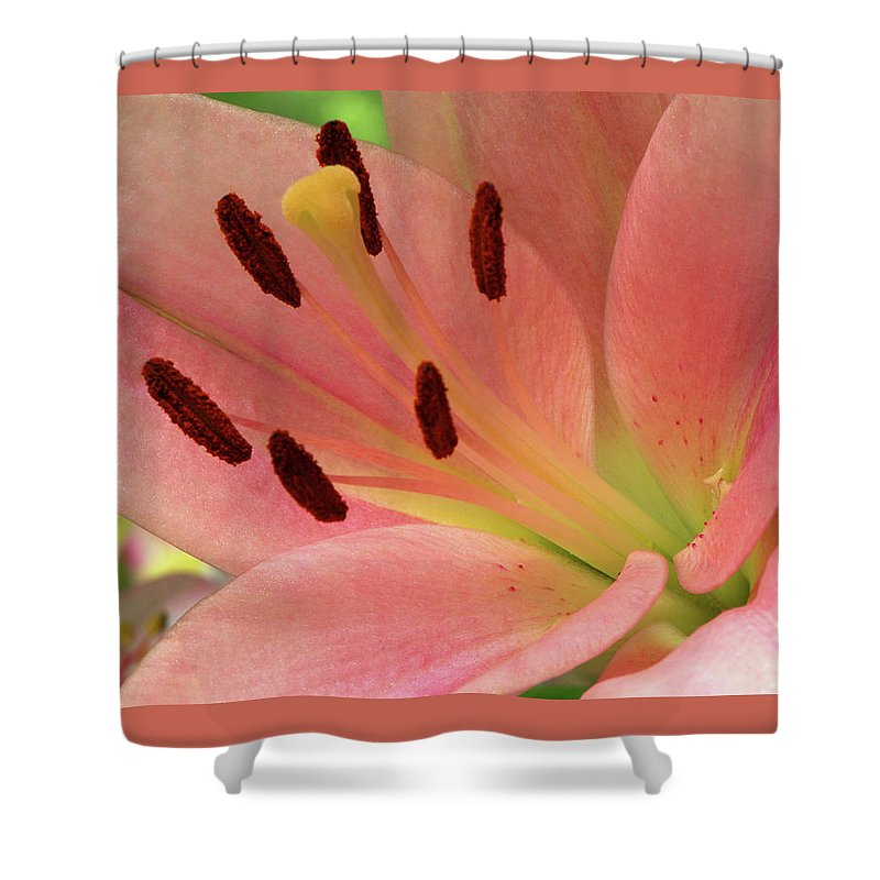 Lily Shower Curtain featuring the photograph Stargazer Lily by Marie Hicks