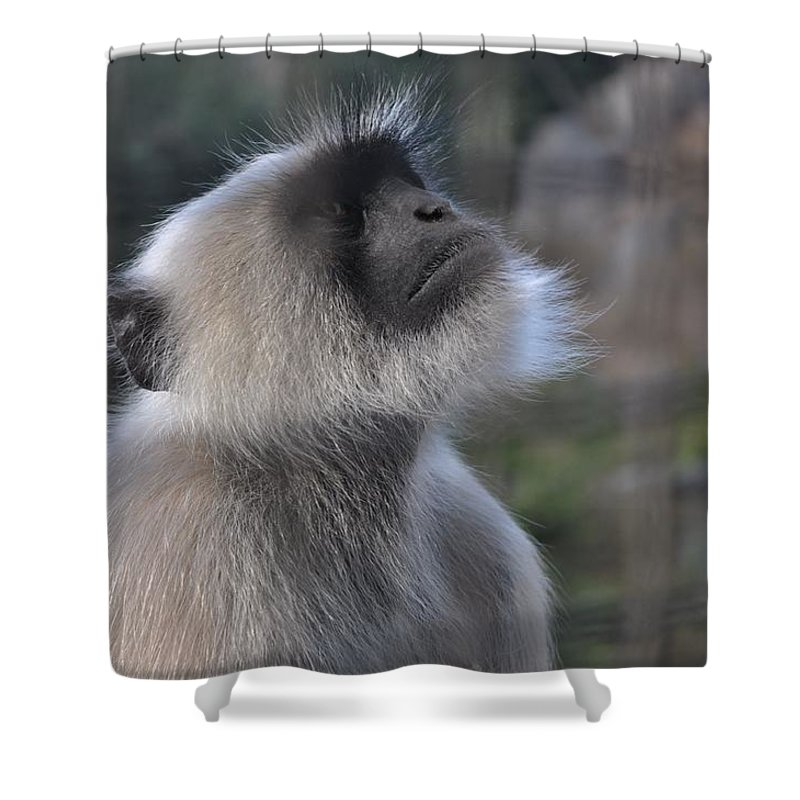 Animals Shower Curtain featuring the photograph Starring In The Sky by Vivek Upadhyay