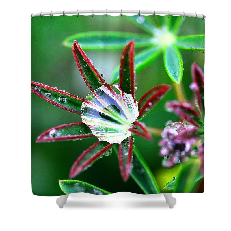 Rain Shower Curtain featuring the photograph Starry Droplets by Marie Jamieson