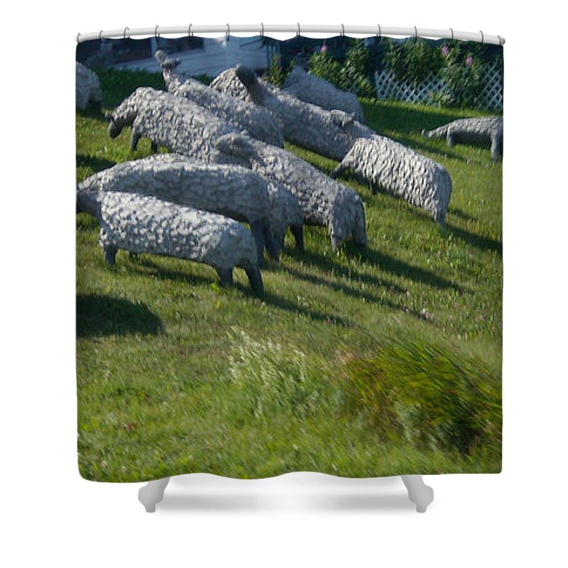 Sheep Shower Curtain featuring the photograph Ste Flavie 002 by Line Gagne