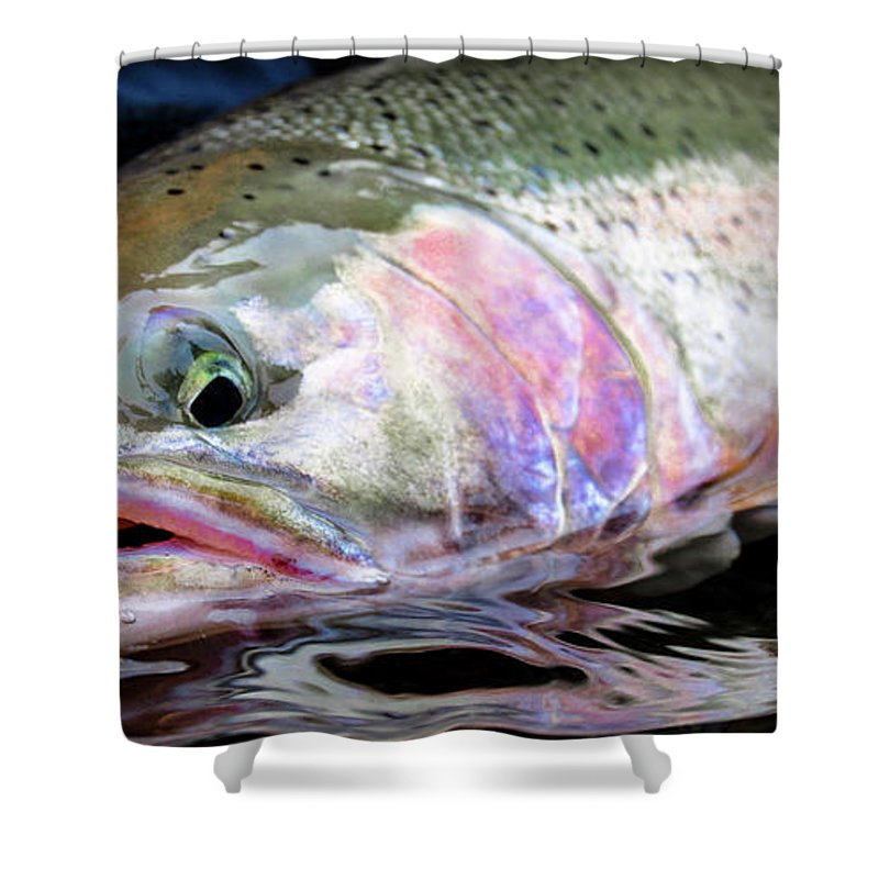 Fishing Shower Curtain featuring the photograph Steelhead 3 by Jason Brooks