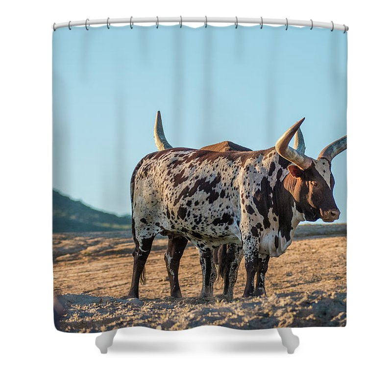 Steers Shower Curtain featuring the photograph Steers In The Desert by Andrew Lelea