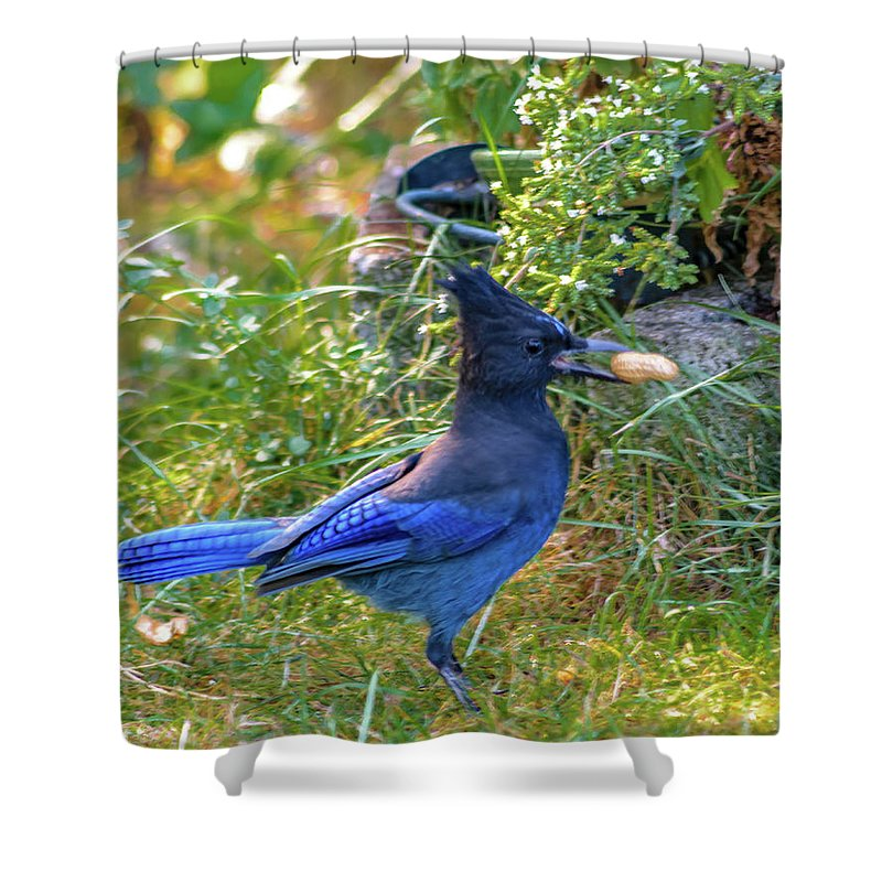 Blue Jay Shower Curtain featuring the photograph Steller's Jay by Daniel LaFollette