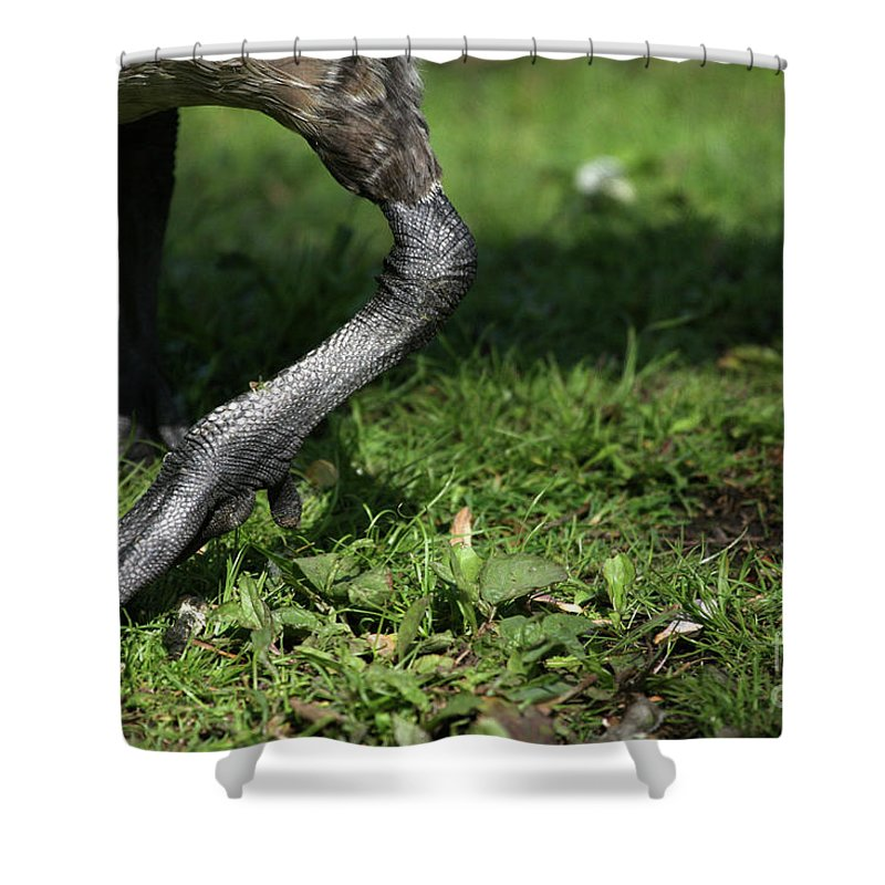 Goose Shower Curtain featuring the photograph Steppin Out by Karol Livote