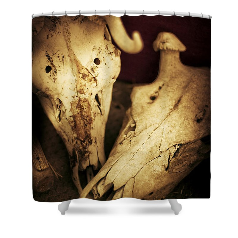 Agriculture Shower Curtain featuring the photograph Still Death by Jorgo Photography - Wall Art Gallery