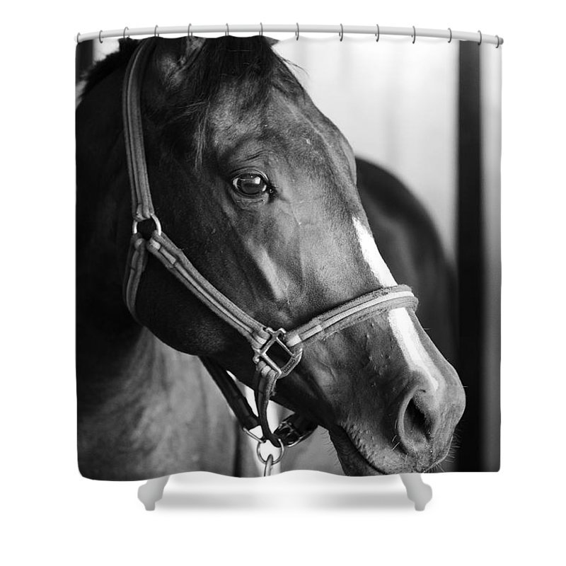 Horse Shower Curtain featuring the photograph Horse And Stillness by Marilyn Hunt