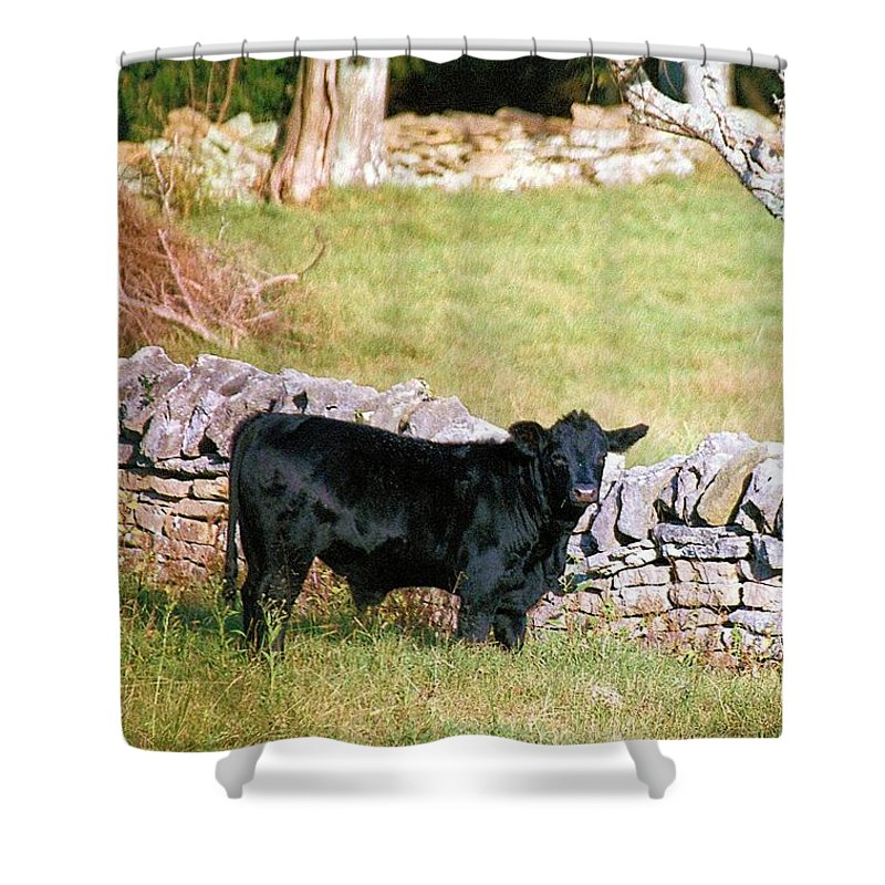 Animals Shower Curtain featuring the photograph Stonewalled by Jan Amiss Photography