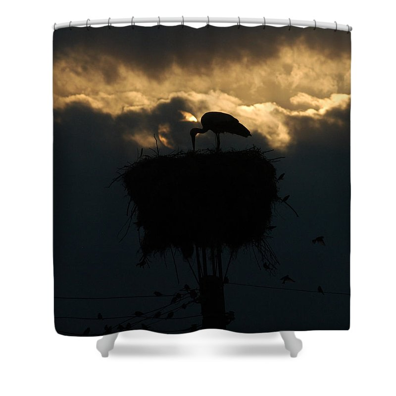 Stork Shower Curtain featuring the photograph Stork With Evening Sun Light by Cliff Norton