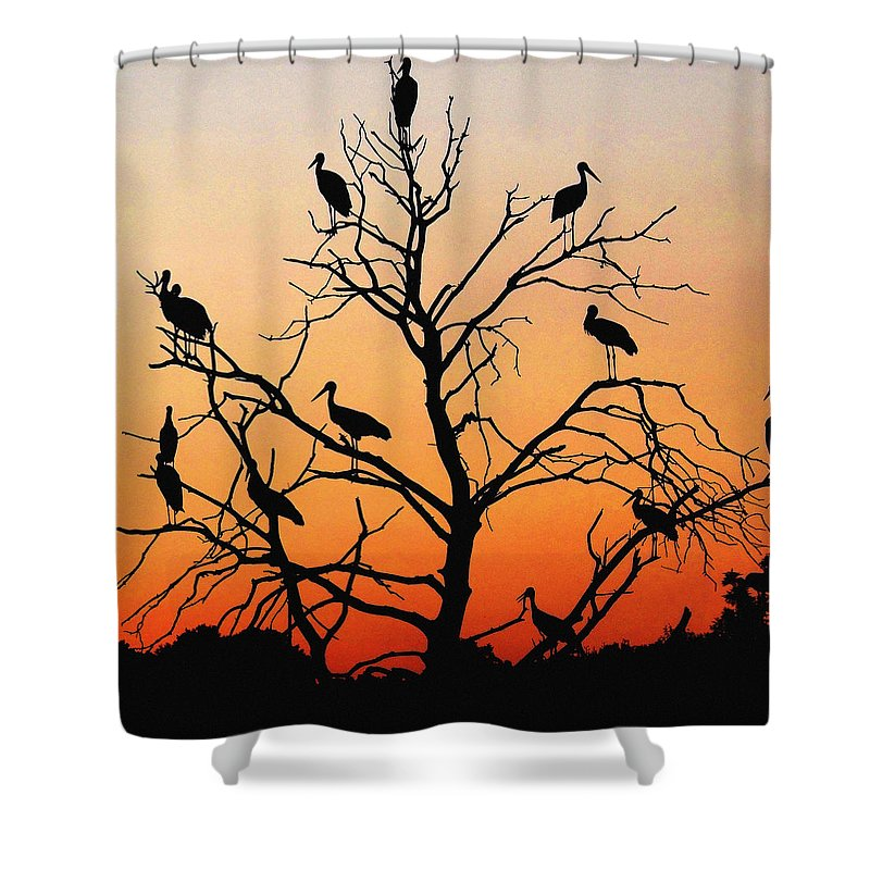 Storks Shower Curtain featuring the photograph Storks In The Evening Sun Light by Cliff Norton