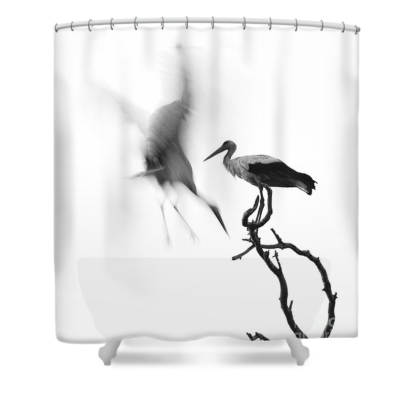 Stork Shower Curtain featuring the photograph Storks by Nahum Budin