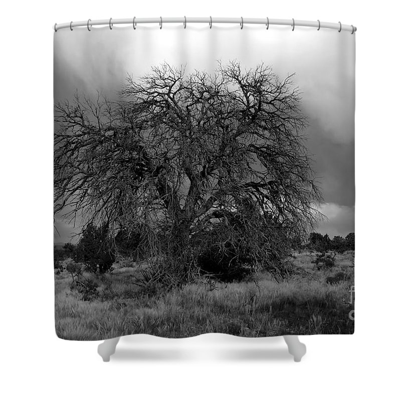 Storm Shower Curtain featuring the photograph Storm Tree by David Lee Thompson