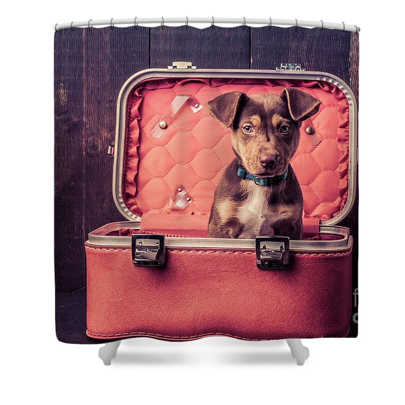 Animal Shower Curtain featuring the photograph Stowaway by Edward Fielding