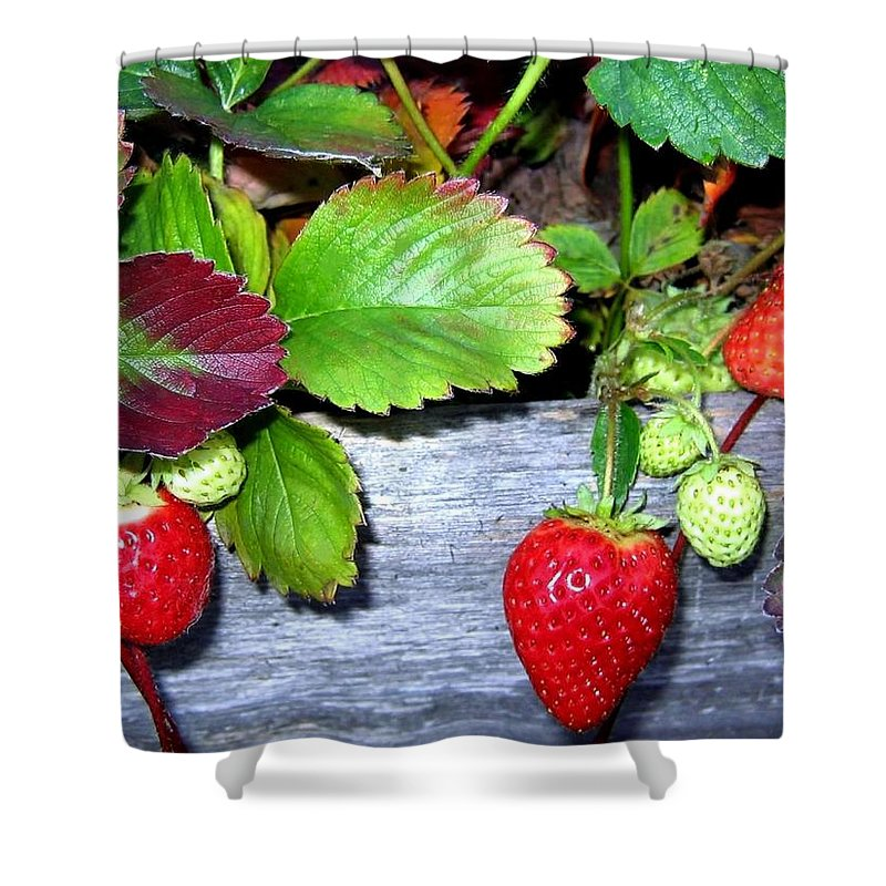 Strawberries Shower Curtain featuring the photograph Strawberries by Will Borden