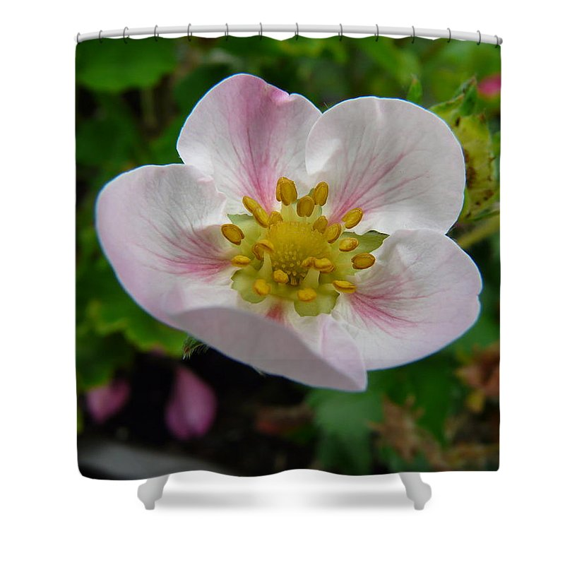 Plant Shower Curtain featuring the photograph Strawberry Blossom by Valerie Ornstein