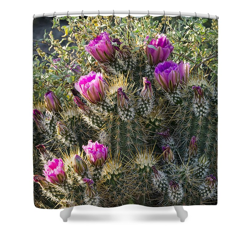 Strawberry Hedgehog Cactus Shower Curtain featuring the photograph Strawberry Hedgehog Cactus by Saija Lehtonen