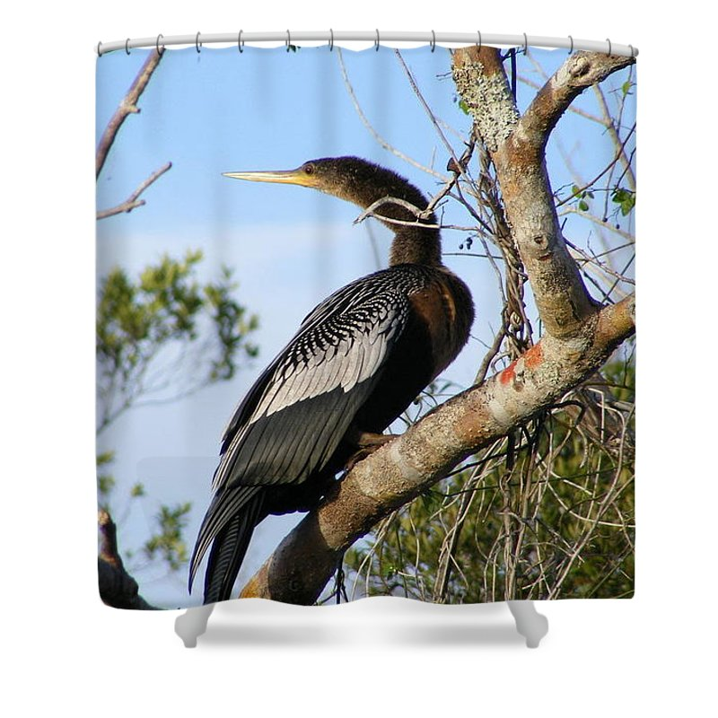 Bird Shower Curtain featuring the photograph Strike A Pose by Ed Smith