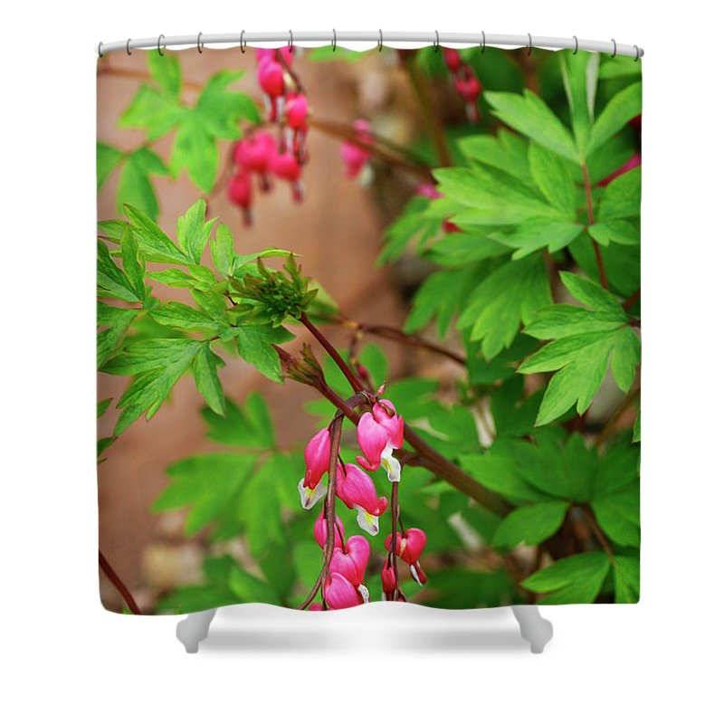 Flower Shower Curtain featuring the photograph String Of Bleeding Hearts by Marilyn Hunt