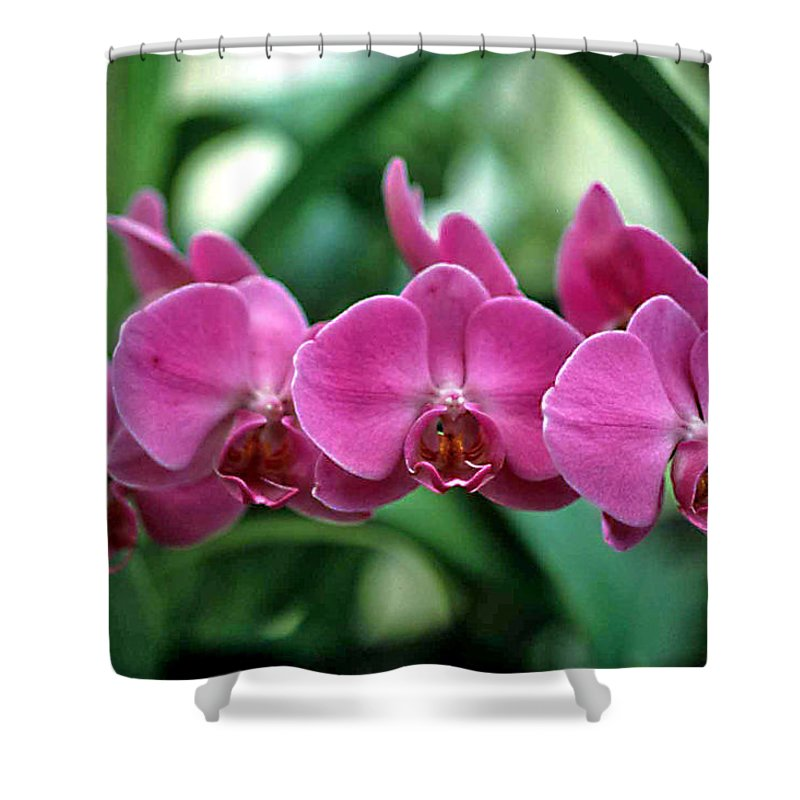 Orchids Shower Curtain featuring the photograph String Of Pearls by Laurie Paci