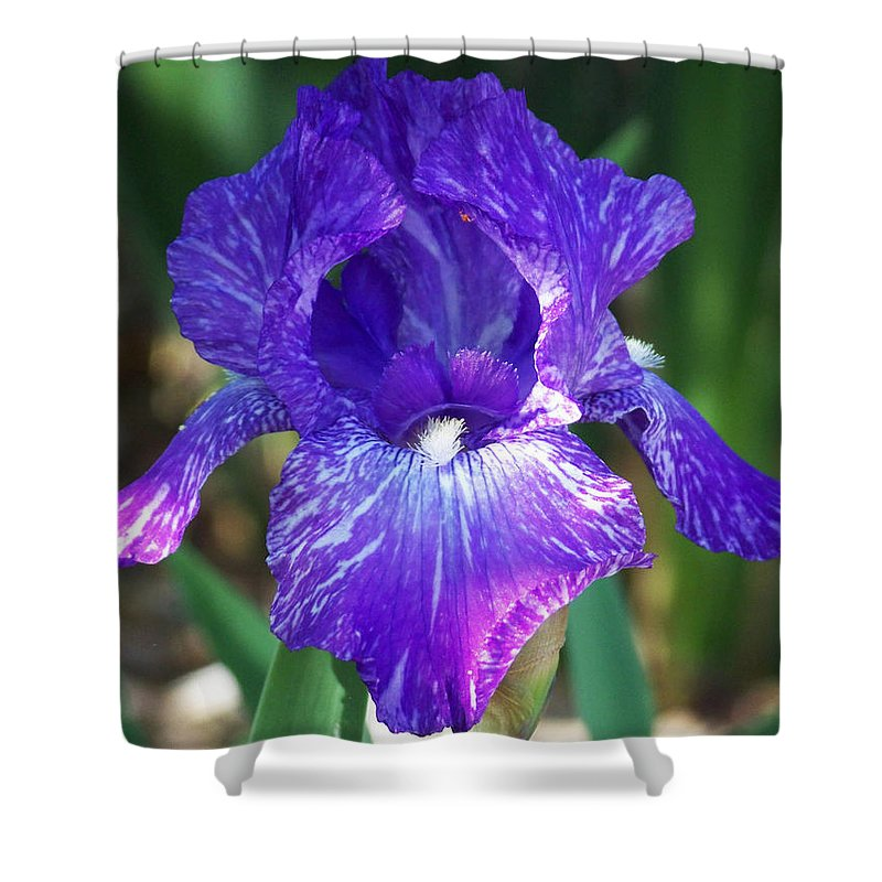 Flowers Shower Curtain featuring the photograph Striped Blue Iris by Kathy McClure