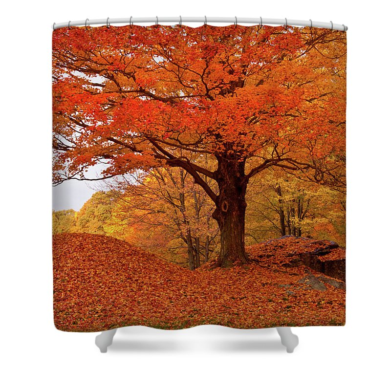 Salem Massachusetts Shower Curtain featuring the photograph Sturdy Maple In Autumn Orange by Jeff Folger