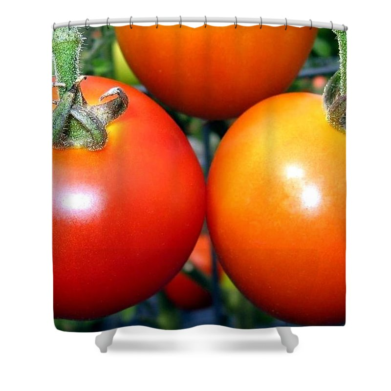 Tomatoes Shower Curtain featuring the photograph Succulent Tomatoes by Will Borden