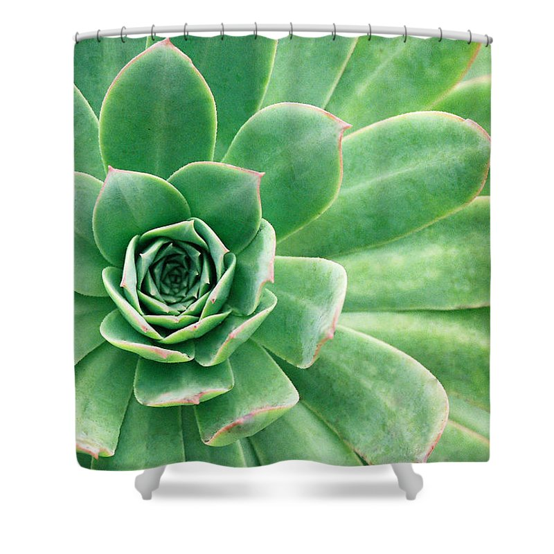 Plants Shower Curtain featuring the photograph Succulents II by Angie Schutt