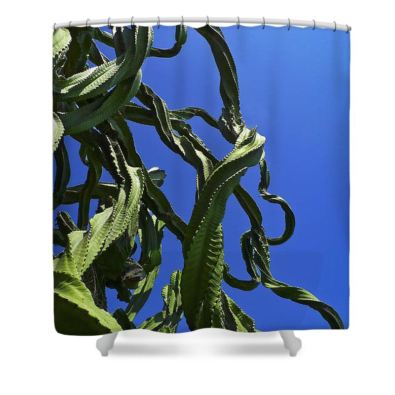 Sugar Pants Shower Curtain featuring the photograph Sugar Pants by Skip Hunt