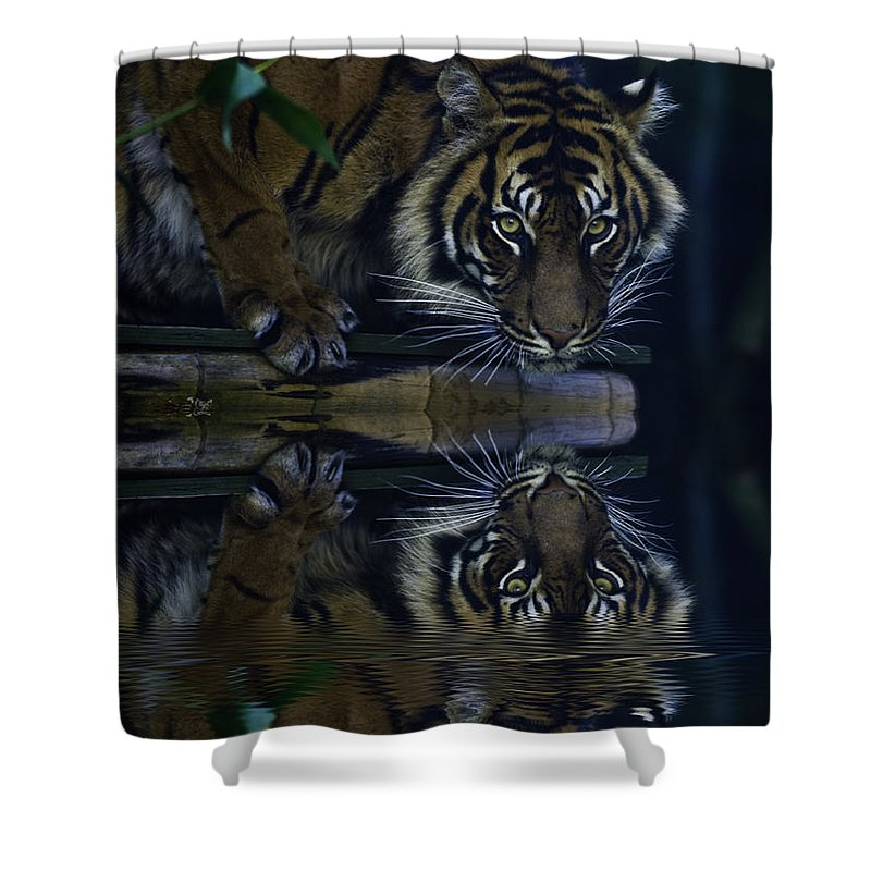 Sumatran Tiger Shower Curtain featuring the photograph Sumatran Tiger Reflection by Sheila Smart Fine Art Photography