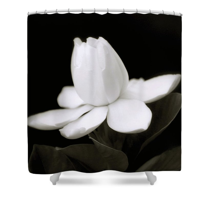 Flower Shower Curtain featuring the photograph Summer Fragrance by Holly Kempe