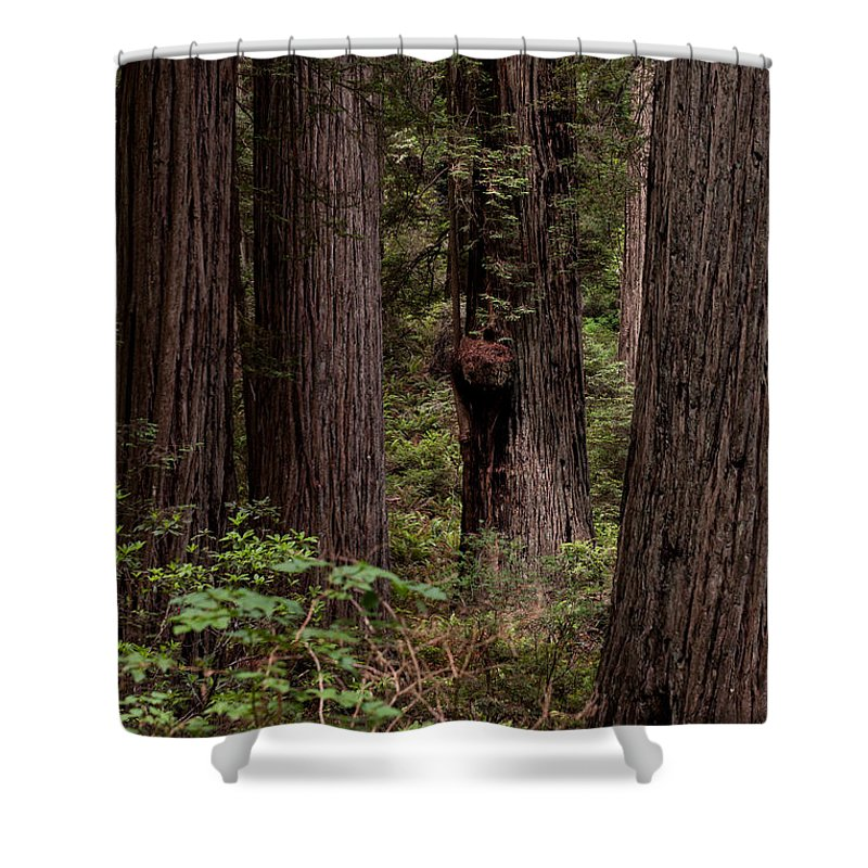Redwood Shower Curtain featuring the photograph Summer In Redwood National Park Vertical by Alexander Fedin