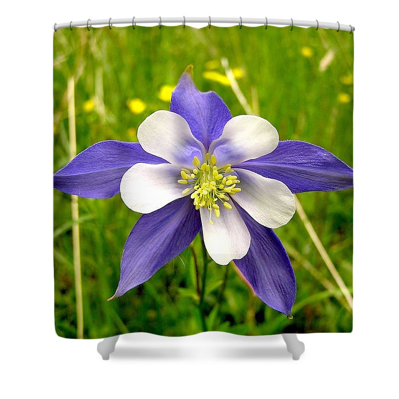 Plant Shower Curtain featuring the photograph Summer In The Rockies by Carol Milisen
