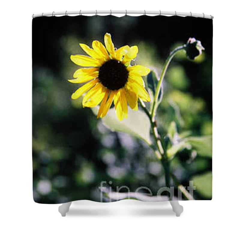Sunflower Shower Curtain featuring the photograph Summer Sunshine by Kathy McClure