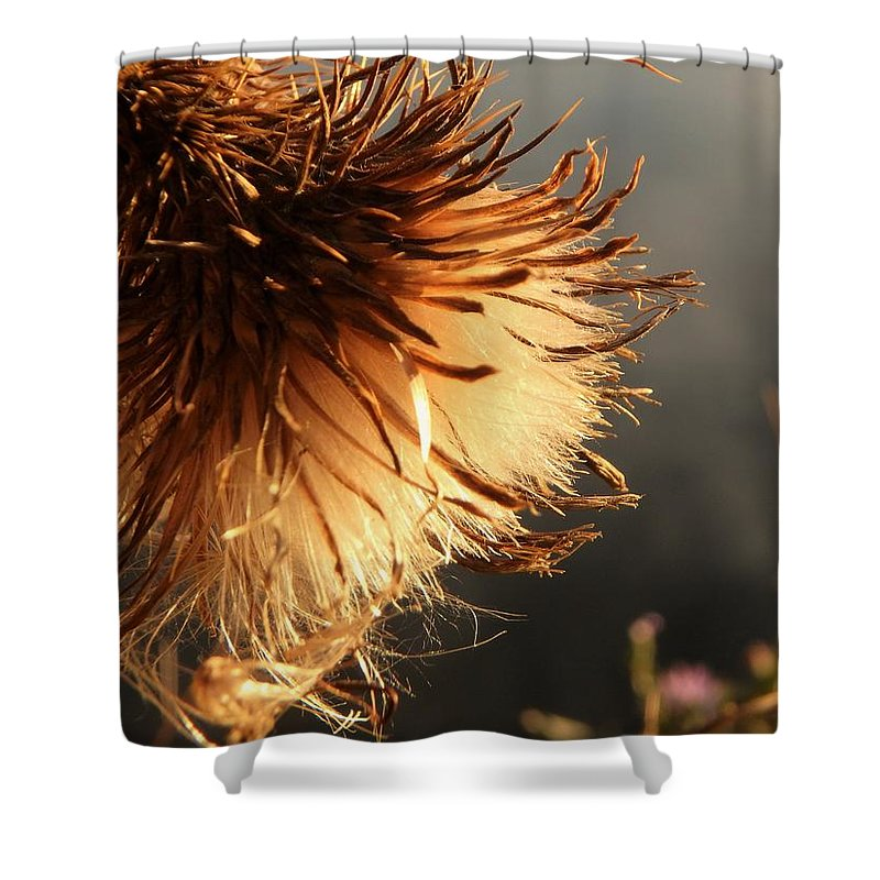 Art Shower Curtain featuring the photograph Summers End by Marty Borsboom