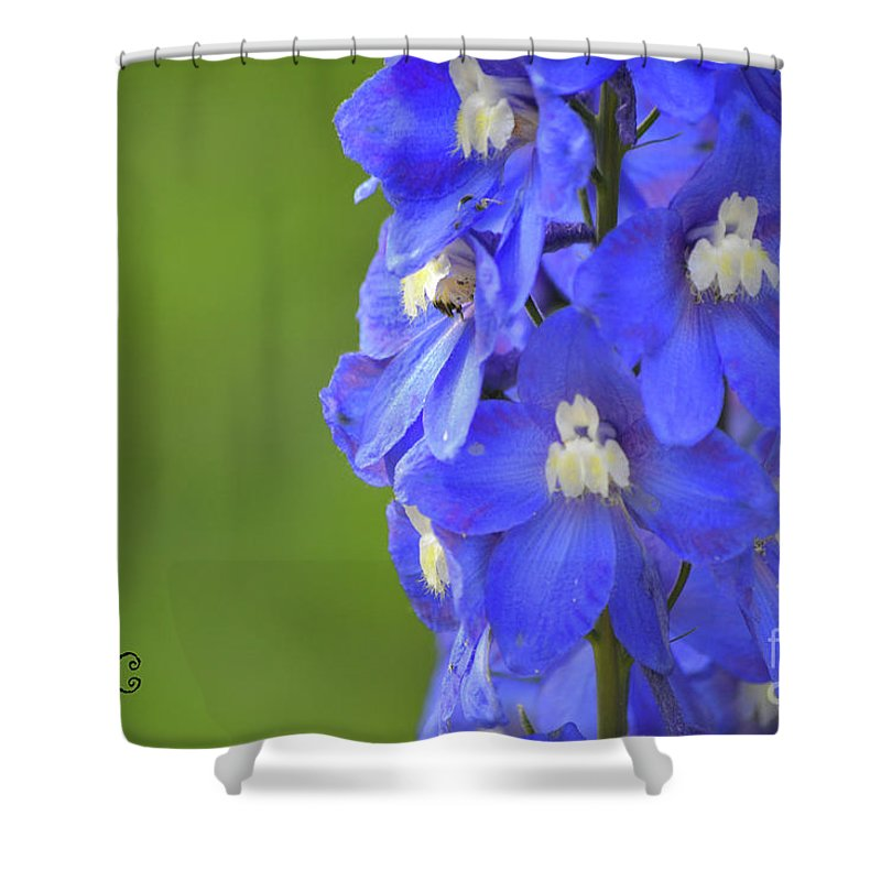 Blue Shower Curtain featuring the photograph Summertime by Traci Cottingham