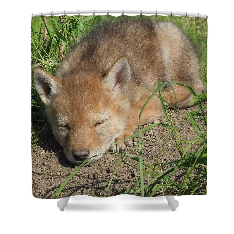 Exploring Shower Curtain featuring the photograph Sun Bather by James Peterson