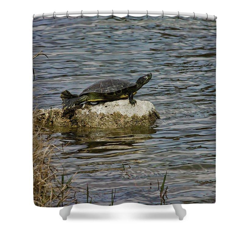 Turtle Shower Curtain featuring the photograph Sun Bathing Stone by Deborah Benoit