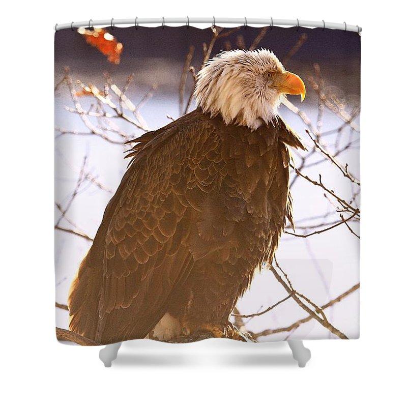 Bald Eagle Shower Curtain featuring the photograph Sun Bird by Donald Cramer