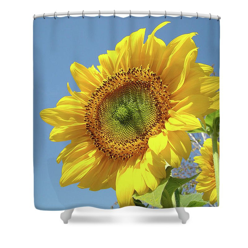 Sunflower Shower Curtain featuring the photograph Sun Flowers Garden Art Prints Baslee Troutman by Baslee Troutman