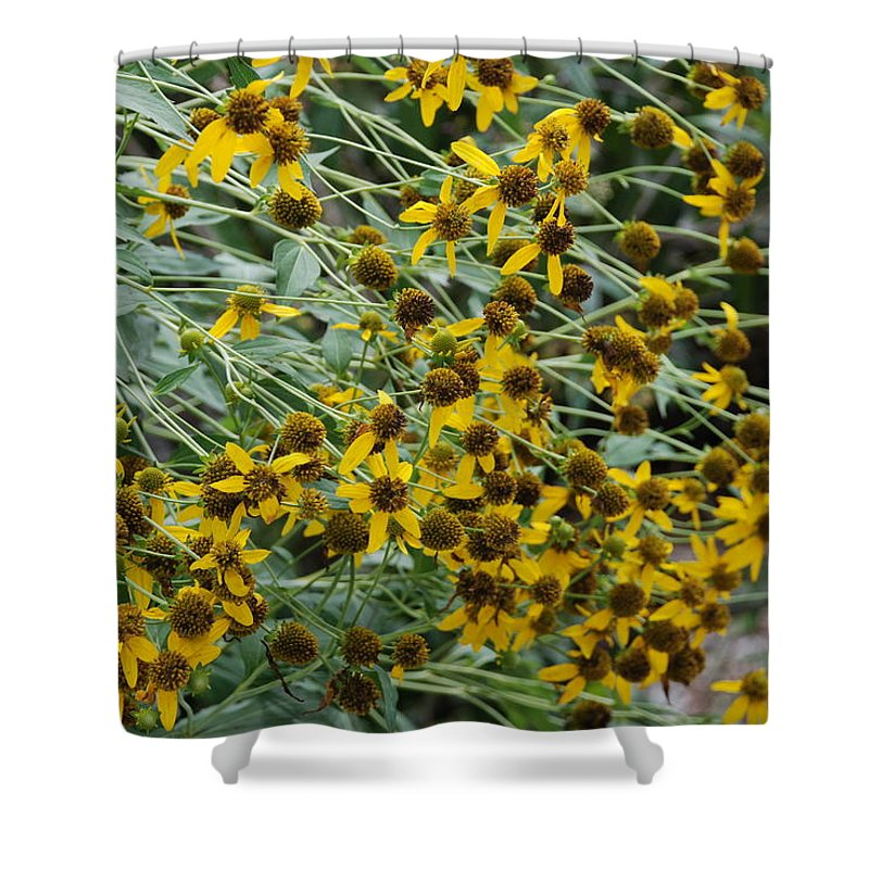 Macro Shower Curtain featuring the photograph Sun Flowers by Rob Hans